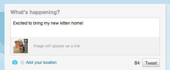 photos_bringingkittenhome