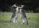 fight! (shutterstock)