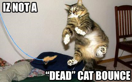 market-dead-cat-bounce