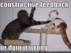 funny-pictures-fighting-cats-constructive-feedback-feature