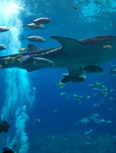 If you've never seen a whale shark, here's why you need to visit Atlanta