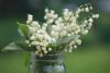 lily-jar-macro-stock-photo-horizontal-preview