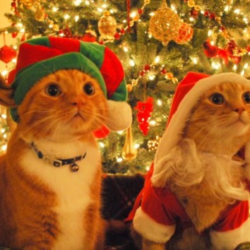Christmas_Cats