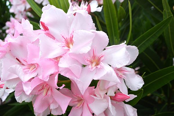 flor-cerca-1