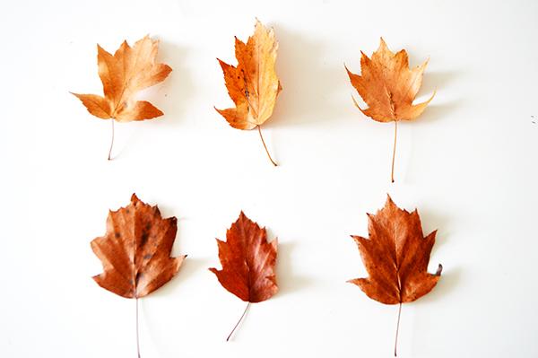 hojas-rojas