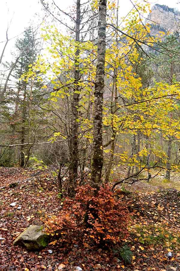 hojas-bosque