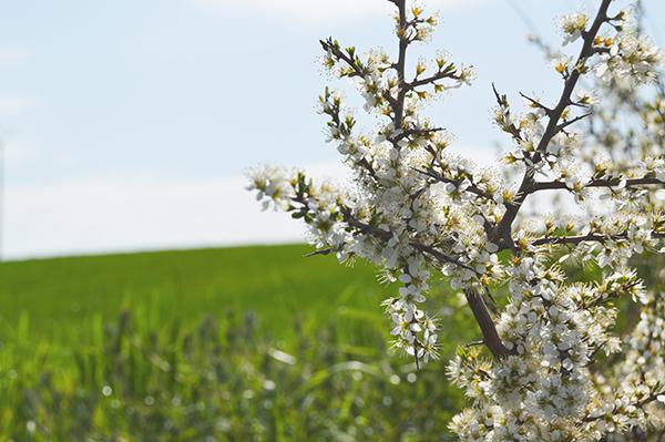AYS-paseo de primavera-9
