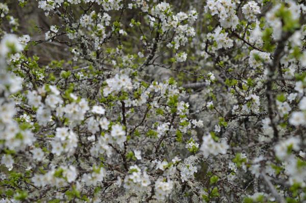 primavera-13