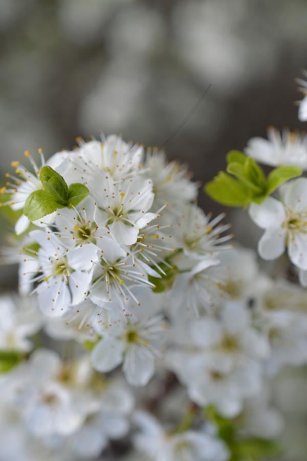 primavera-17