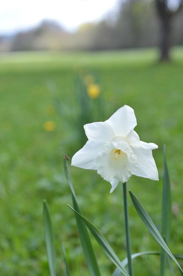 primavera-9