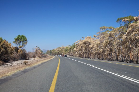 Wildfire damage along road, Albertinia, South Africa  (c) Allyson Scott