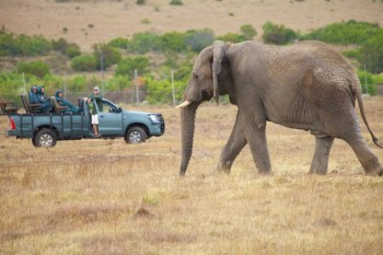 African elephant and safari Jeep (c) Allyson Scott