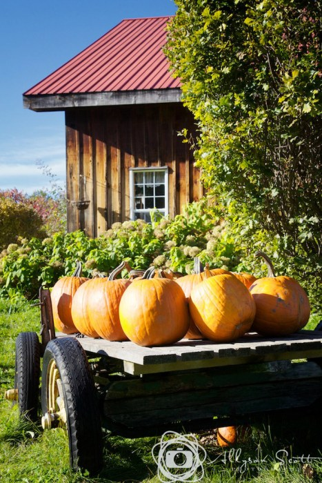 Cart of pumpkins outside winery