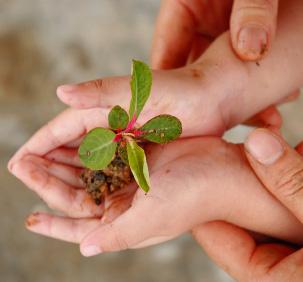 Pentingnya Seorang Guru (Syaikh)  Memperbaiki Niat Muridnya