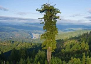 قصة الشجرة والرجل العجوز