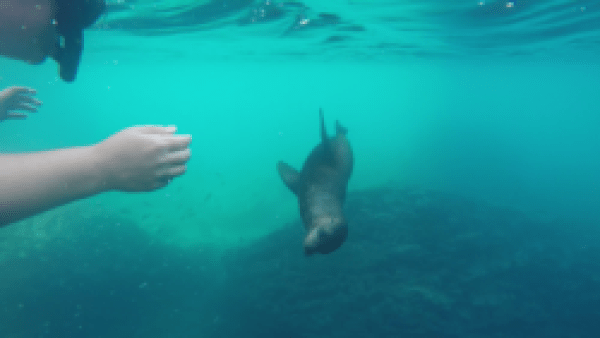 A snapshot from the video of our sea lion friend