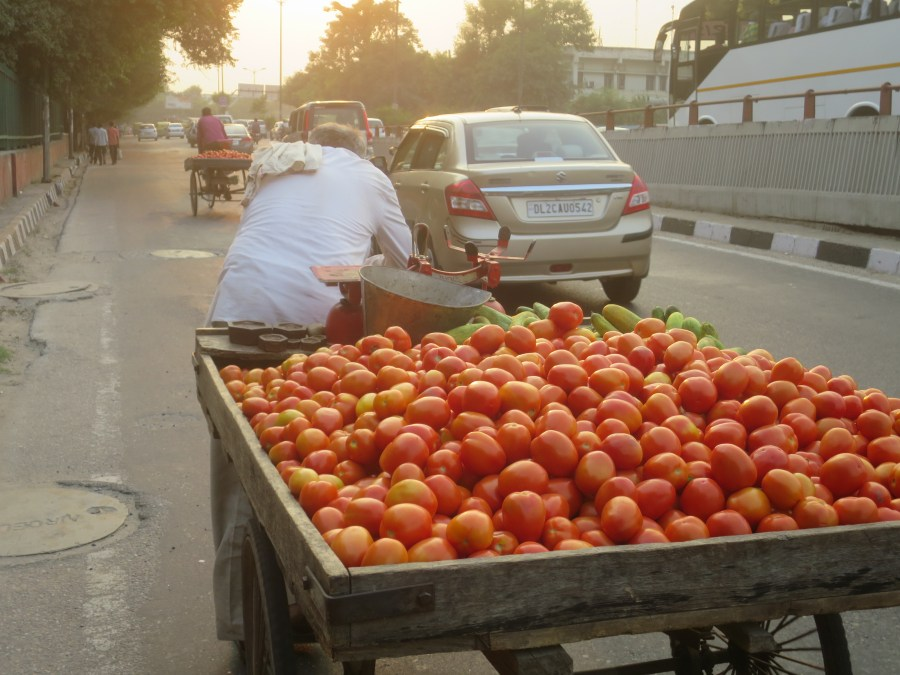 A man bravely pushingg his tomato cart through the Delhi streets