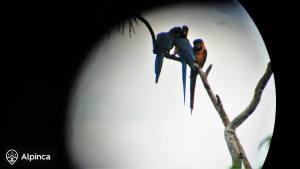 dzungla-ekwador-wycieczki-alpinca