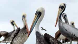 paracas-ballestas-islands-peru-coast