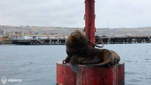 seals-ilo-trip-to-peru