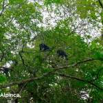 travel-to-peru-monkey-jungle