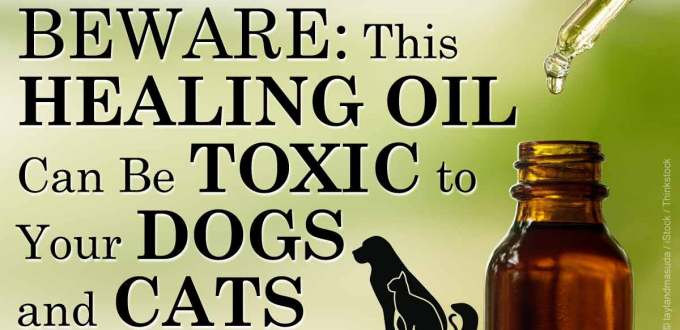 tea-tree-oil-toxic-to-pets-fb