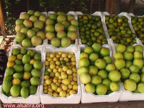 فاكهة مقنا