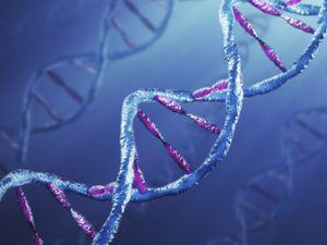 Usan ADN como disco duro para almacenar datos