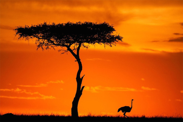 Sunsets On The Masai Mara