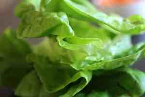 butter lettuce, lettuce close up, lettuce wraps