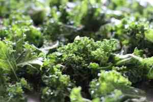 kale chips, crunchy kale, baked kale chips
