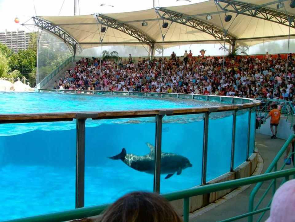 Baía dos Golfinhos - Zoo