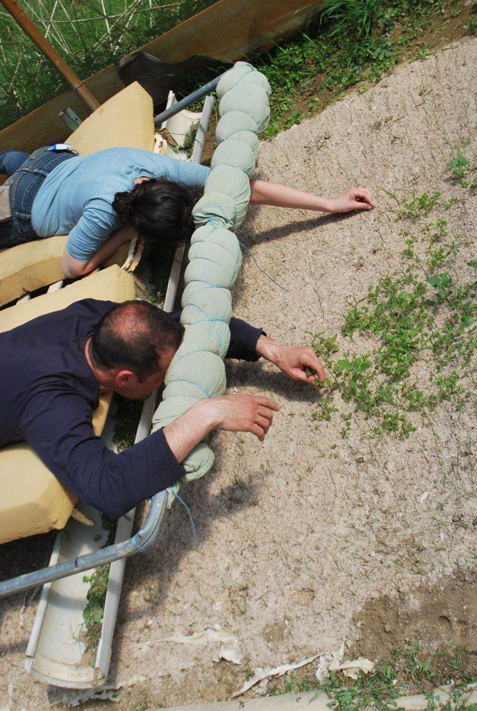 activités et plantations mai 2016