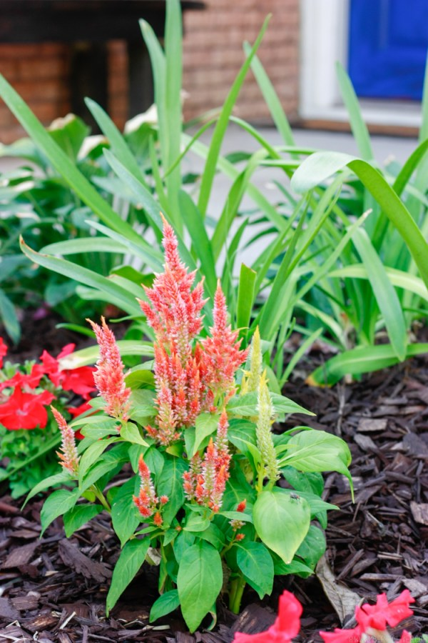 curb-appeal-flower-bed-makeover-20