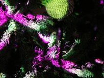 Ambos&& - Árvore de Natal