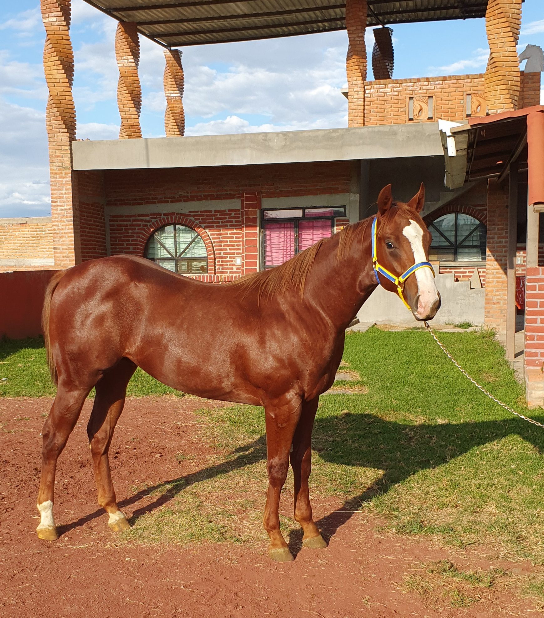 Lote 320 20200919_225255