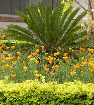 سیکاس - Plant & Nature Photos - myda's Photoblog