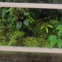 Terrarium and Vivarium Maintenance