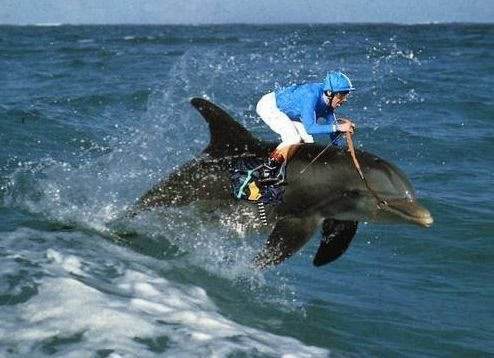 ridingdolphins