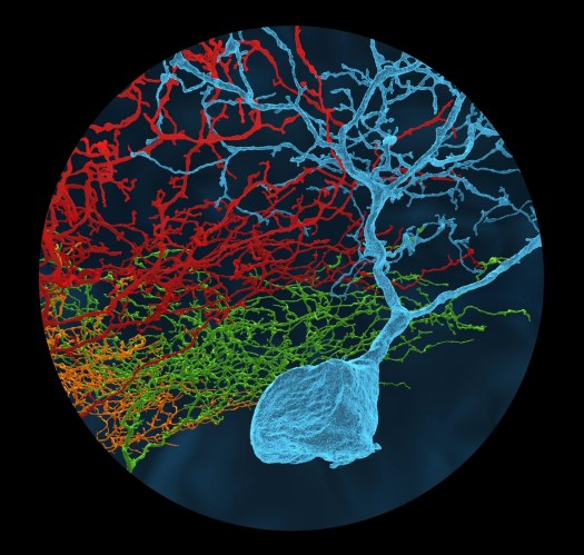 neurons reconstructed in eyewire, connectome