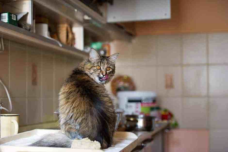 Funny cat in the kitchen