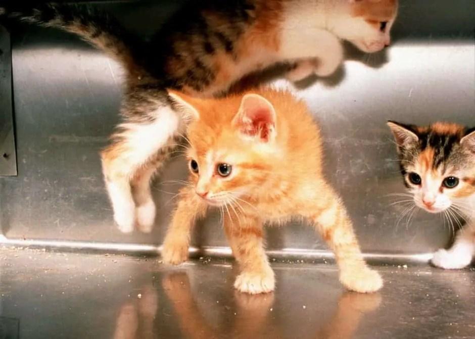 KittenJump