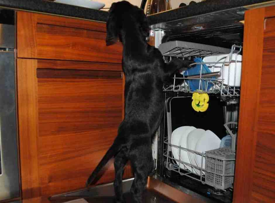 pup-in-dishwasher