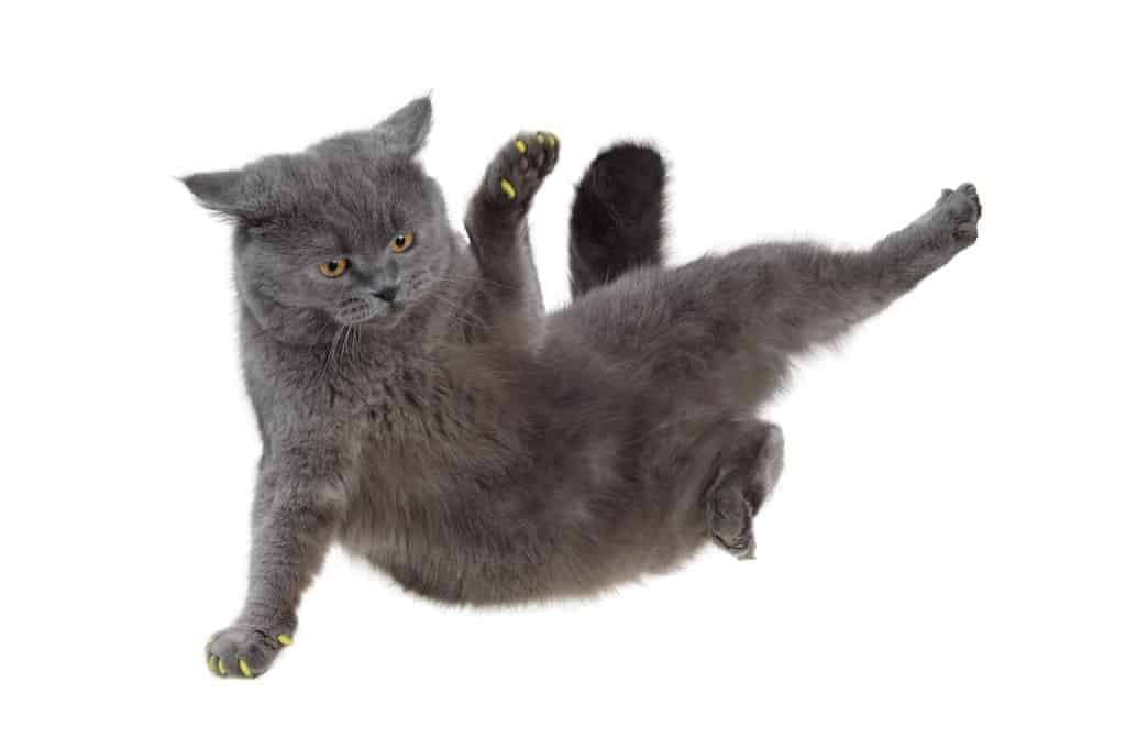 Breakdancing Cat Gif