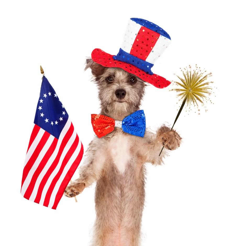 pet fireworks fears