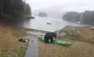 bear-kayak