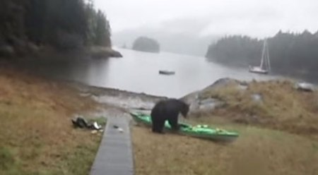 bear-kayak