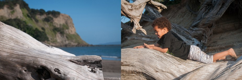 Toddler boy on tree montage portrait at sunset professional portrait by Anais Chaine Auckland photographer in Shakespeare Bay, New Zealand