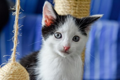A kitten stares behind a ball of straw yarn