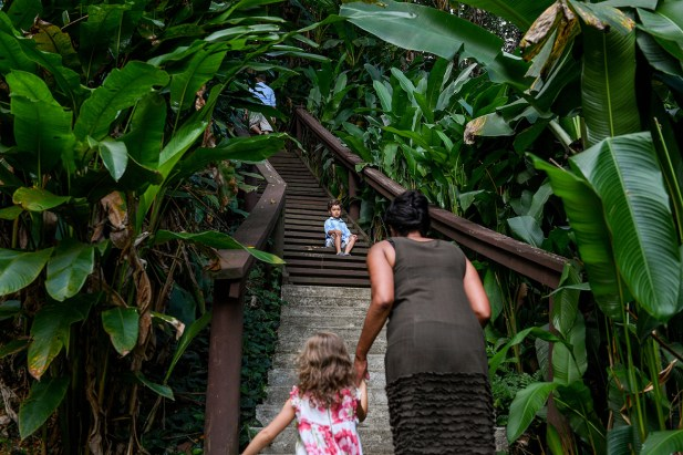 Young boy up steps against Tropical rain forest